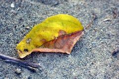 Падение листьев на землю стоковое изображение