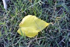 Падение листьев на землю стоковое фото rf
