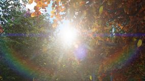 Падение листьев осени от деревьев в парке осени Парк осени красочный на солнечный день r бесплатная иллюстрация