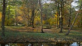 Падение лист в голландский парк видеоматериал
