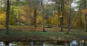 Падение лист в парк Голландии видеоматериал