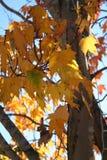 падение осени выходит валы установки Стоковые Фотографии RF
