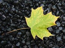 падение первое цветов Стоковое Изображение RF