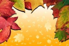 падение предпосылки осени выходит сезон Стоковые Фотографии RF