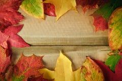 падение предпосылки осени выходит сезон Стоковое фото RF