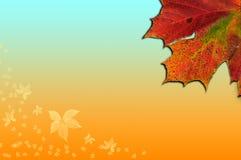 падение предпосылки осени выходит сезон Стоковые Изображения RF