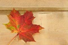 падение предпосылки осени выходит сезон Стоковые Изображения