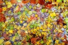падение предпосылки осени цветастое выходит вода Стоковые Изображения RF