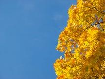 падение предпосылки сезонное Стоковая Фотография