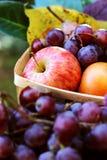 Падение приносить еда сбора виноградин яблок осени, здоровье Стоковое фото RF