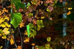 Падение приходит к лесу стоковые фото