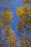падение цветов смотрит вверх Стоковое Фото