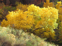 падение цветов Стоковые Изображения