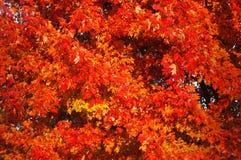падение цветов Стоковое фото RF