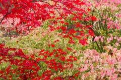 падение цветов стоковое изображение