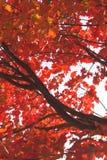 падение цветов Стоковое Фото