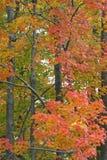 падение цветов Стоковая Фотография