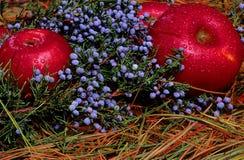 падение яблок Стоковое Изображение RF