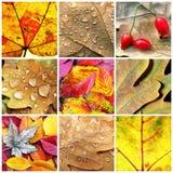 Падение ягод коллажа крупного плана листьев Стоковая Фотография RF