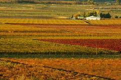 падение vineyards20 Стоковое Изображение
