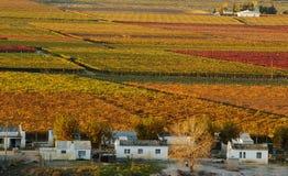 падение vineyards25 Стоковые Изображения RF