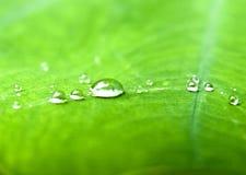 Падения воды в зеленых листьях Стоковые Фото