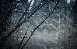 Падения воды на деревьях стоковое изображение rf