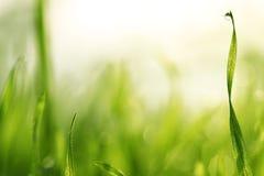 Падения воды на зеленой траве Стоковые Фото