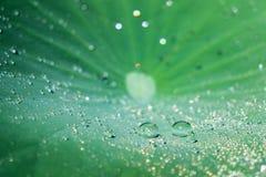 Падения воды на зеленых листьях лотоса Стоковая Фотография RF