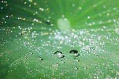 Падения воды на зеленых листьях лотоса Стоковые Изображения