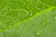 Падения воды на зеленых листьях Макрос Стоковые Фото