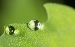 Падения воды на зеленых листьях Стоковое Изображение