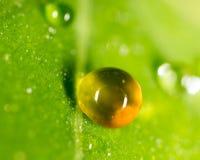 Падения воды на зеленых листьях Стоковая Фотография