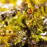 Падения воды на мхе Стоковые Фото