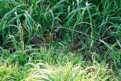Падения воды на свежей предпосылке зеленой травы Предпосылка зеленой травы Стоковая Фотография RF