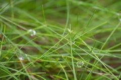 Падения воды на траве в лесе падения Стоковые Фото