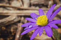 Падения воды на цветке стоковое фото
