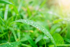 Падения воды пузыря крупного плана на зеленых лист Стоковое фото RF