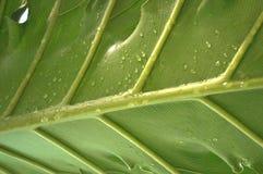 Падения в ветви ладони Стоковая Фотография RF