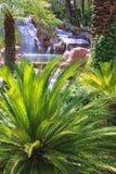 Падения в Tropics Стоковая Фотография