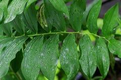 Падения дождя на листве кустов Стоковые Фотографии RF