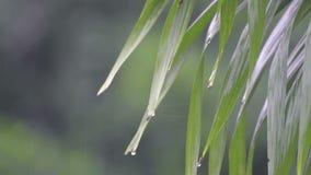 Падения дождя на листьях сток-видео