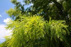Падения дождя на листьях Стоковые Фотографии RF