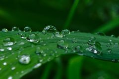 Падения дождя на лист лилии дня стоковая фотография