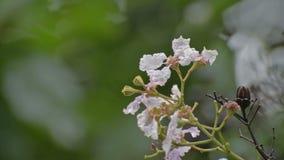 Падения дождя на полевых цветках сток-видео
