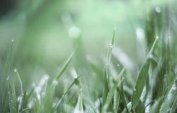 Падения зеленой травы и воды после дождя Стоковые Фото