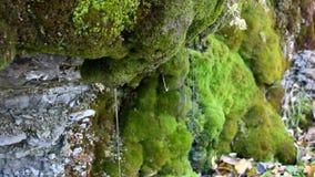 Падения и тонкие струйки чистой воды пропускают вниз от мшистой скалы видеоматериал