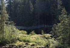 Падения лося висячего моста, река Campbell стоковые изображения rf