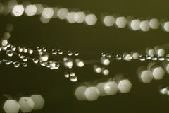 падения меньший дождь Стоковые Изображения