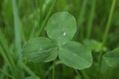 Падения на зеленом разрешении в перми Стоковая Фотография RF